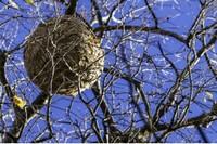 nid-arbre-200